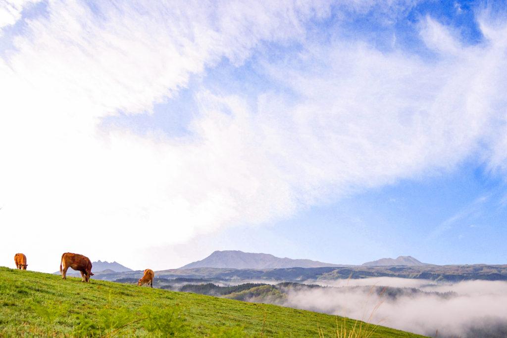雲海と草原とあか牛