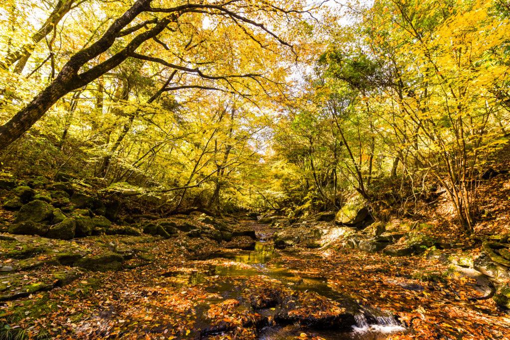 秋のマゼノ渓谷④