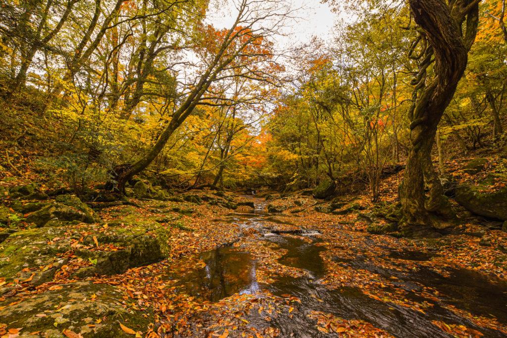 秋のマゼノ渓谷③