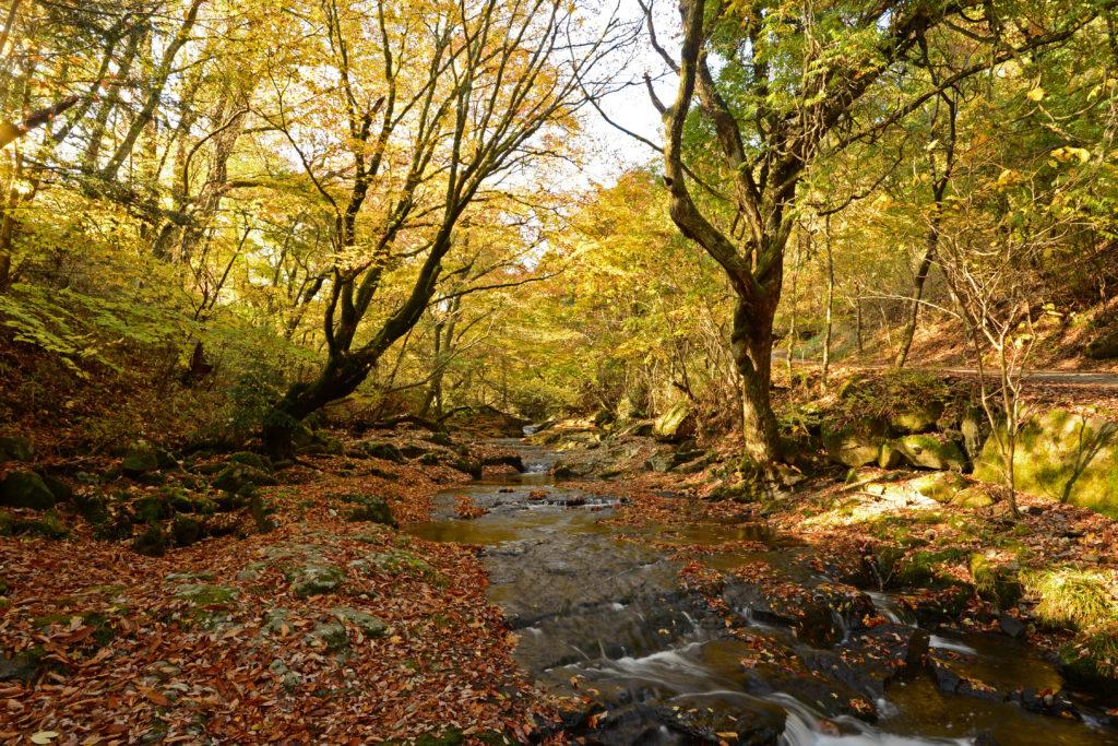 秋のマゼノ渓谷②