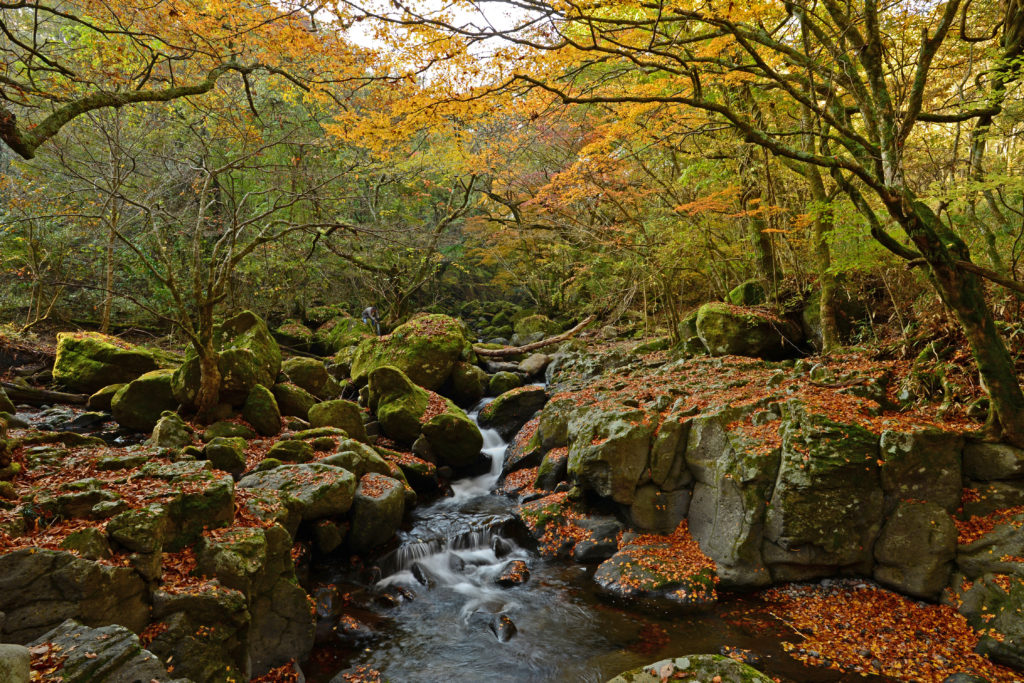 秋のマゼノ渓谷